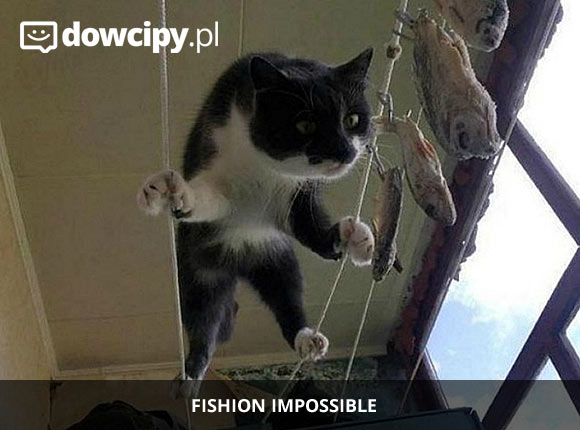 Fishion impossible