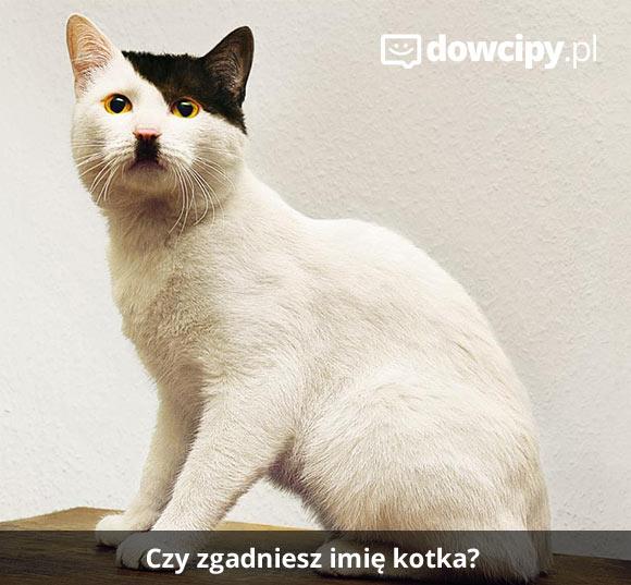Czy zgadniesz imię kotka?