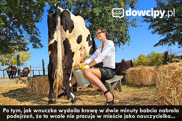 Po tym, jak wnuczka wydoiła krowę w dwie minuty babcia nabrała podejrzeń, że ta wcale nie pracuje w mieście jako nauczycielka...